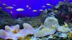Khám phá đại dương thu nhỏ trong lòng thành phố biển xinh đẹp