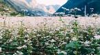 Kinh nghiệm Phượt Hà Giang - Tháng 10 hút hồn với hoa Tam giác mạch