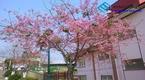 Đà Lạt thành phố bốn mùa hoa khoe sắc