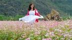 Khám phá sắc hồng trên non cao Hà Giang mùa hoa Tam Giác Mạch