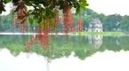Lạc bước trên những cung đường hoa tuyệt đẹp ở Việt Nam (P1)